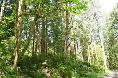 Snohomish County Residential Lots & Land For Sale: 268 Whitman Rd