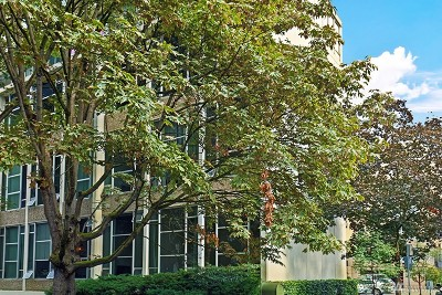 Seattle Condo/Townhouse For Sale: 1000 Union St #303