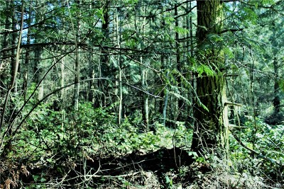 Residential Lots & Land For Sale: 2900 Cliff St