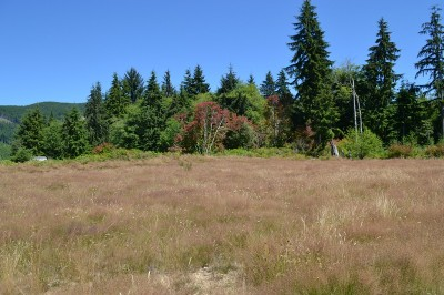Forks Residential Lots & Land For Sale: 9999 Elk Corner Rd