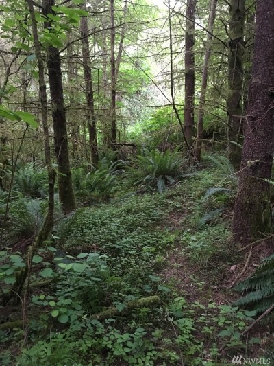 Tenino Residential Lots & Land For Sale: 1341 Wright Rd SE