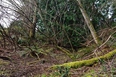 Langley Residential Lots & Land For Sale: 4358 Douglas Lot#14 St