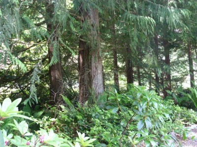 Port Ludlow Residential Lots & Land For Sale: 143 Forester Lane
