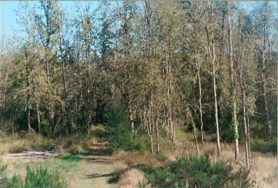 Pierce County Residential Lots & Land For Sale: 2721 158th Ave KPS