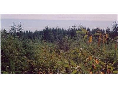 Grays Harbor County Residential Lots & Land For Sale: Xxx 5th Ave & Sr 109
