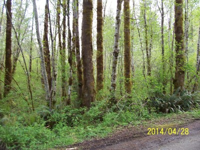 Residential Lots & Land For Sale: W Star Lake Dr