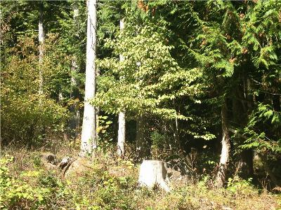 Whatcom County Residential Lots & Land For Sale: 333 W Alder Dr