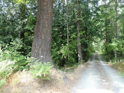 Bellingham WA Residential Lots & Land For Sale: $39,900
