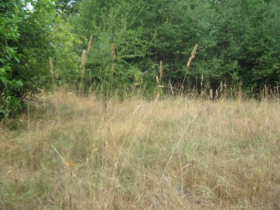 Residential Lots & Land For Sale: 513 7th Ave
