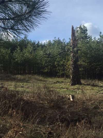 Deer Park Residential Lots & Land For Sale: Ranch