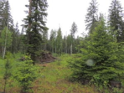 Cusick Residential Lots & Land For Sale: Fir