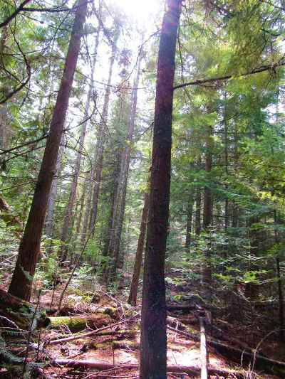 Cusick Residential Lots & Land For Sale: River Bend Est 5th