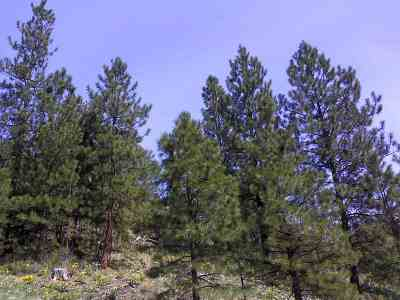 Kettle Falls Residential Lots & Land For Sale: 25xx Bridgeman-Rettinger Rd