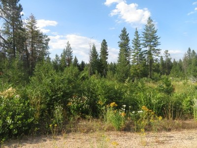 Residential Lots & Land For Sale: W Forest Haven #Parcel C