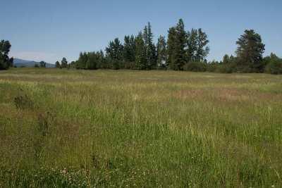 Deer Park Residential Lots & Land For Sale: Dahl