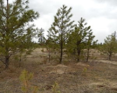 Loon Lk Residential Lots & Land For Sale: Maple
