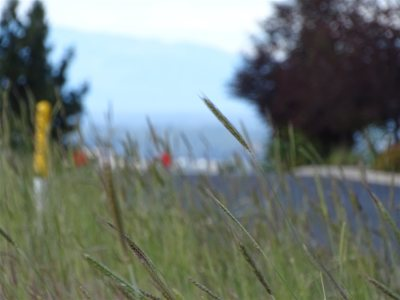 spokane Residential Lots & Land New: N Orchard #P#.0229