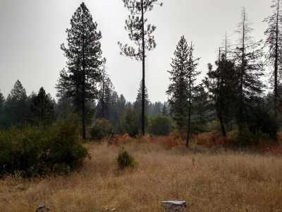 Residential Lots & Land New: 2824 Horseshoe Lake Rd