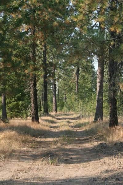 Deer Park Residential Lots & Land For Sale: 1404 Mason Rd