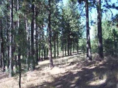 Nine Mile Falls Residential Lots & Land For Sale: Xx Pine Ridge Way