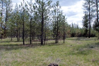 Tumtum Residential Lots & Land For Sale: 5610 Corkscrew Canyon Rd