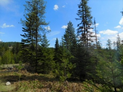 Ione Residential Lots & Land New: 397785-B 20 Hwy #X0x0 Hwy