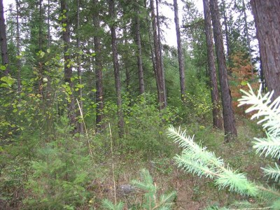 Northport Residential Lots & Land For Sale: Tbd Stone Mountain Way