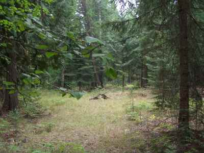 Ione Residential Lots & Land For Sale: 121 N Creek Side Dr