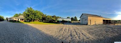 West Richland Single Family Home For Sale: 95204 N Harrington Rd