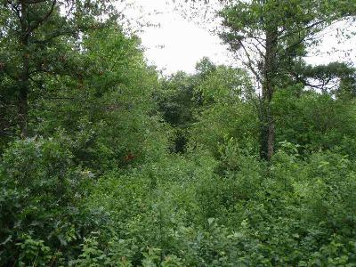 Iola Residential Lots & Land For Sale: Lot 11 Woodberry Acres
