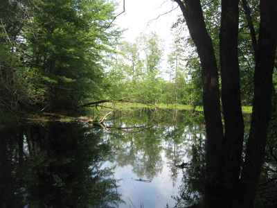 Rib Lake Residential Lots & Land For Sale: 40 Acres W411 Trout Avenue