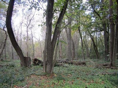 Grafton Residential Lots & Land For Sale: 439 Hillcrest Rd