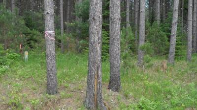 Menominee County, Marinette County Residential Lots & Land For Sale: Lt10 Old Orchard Trl