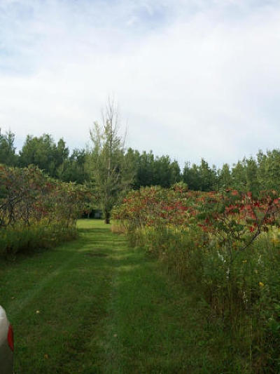 Menominee County, Marinette County Residential Lots & Land For Sale: N10273 Forest Rd