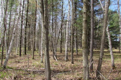 Wausaukee Residential Lots & Land For Sale: Lt0 Russ Mainik Rd