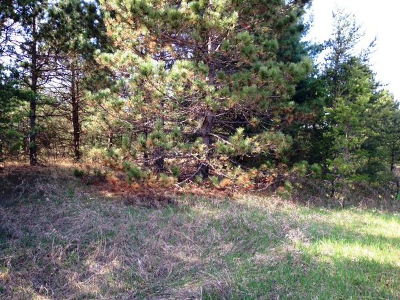 Menominee County, Marinette County Residential Lots & Land For Sale: Lt65 Hwy A #Lt66