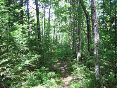 Wausaukee Residential Lots & Land For Sale: Lot 8 Feller Rd