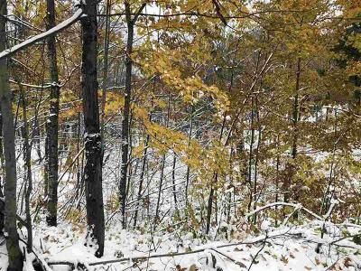 Wausaukee Residential Lots & Land For Sale: 31.8 Acres Seefeldt Rd