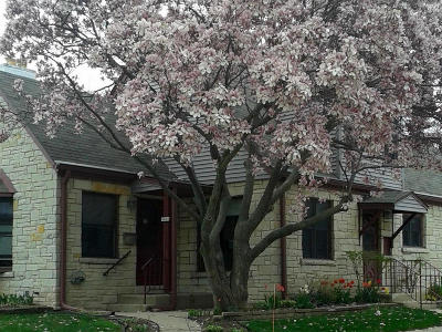 Milwaukee Single Family Home Active Contingent With Offer: 4408 S Adams Ave