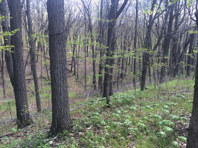 West Bend, Town Of West, Town Of Trenton Residential Lots & Land For Sale: Lt104 Hummingbird Ct
