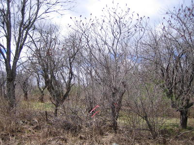 Amberg Residential Lots & Land For Sale: 9.6 Acres Wontor Rd