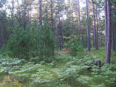 Menominee County, Marinette County Residential Lots & Land For Sale: Lot 13 Abbey Ln