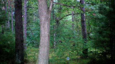 Crivitz Residential Lots & Land For Sale: Lot 80 Hwy W