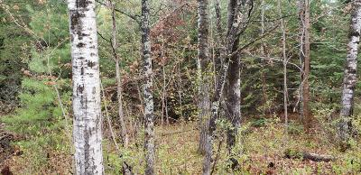 Menominee County, Marinette County Residential Lots & Land For Sale: Lt6 Deer Lake Rd