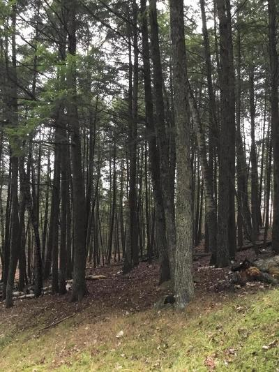 Residential Lots & Land For Sale: Lt.21 Wolf Lake Rd