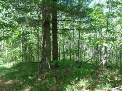 Mountain Residential Lots & Land For Sale: 14237 Dufek Ln
