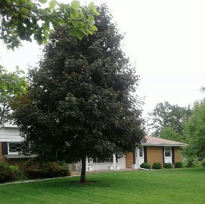 Menomonee Falls Single Family Home Active Contingent With Offer: N63w15782 Claremore Cir