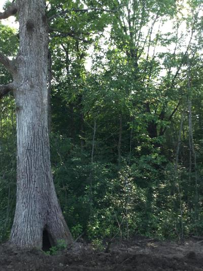 Menominee County, Marinette County Residential Lots & Land For Sale: Lt. 8 Witt St.