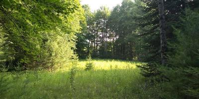 Wausaukee Residential Lots & Land For Sale: Lt 4 Pines Rd