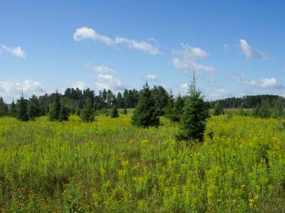 Antigo Residential Lots & Land For Sale: W9515 Cth F